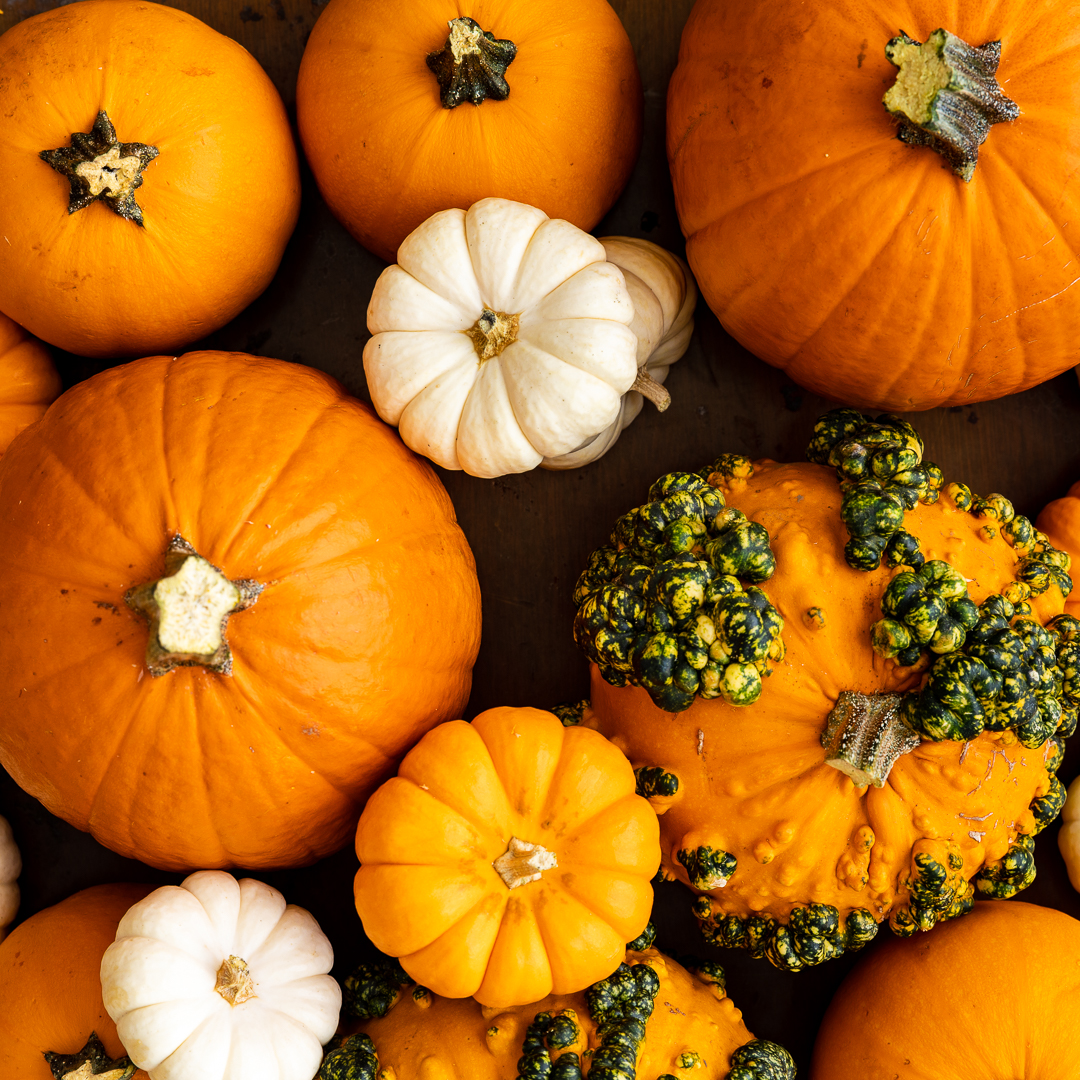 4 ideas you and your pumpkins need this month